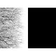 Aurores des lichens