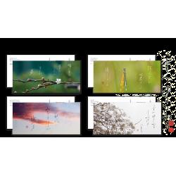 Cartes postales — Naissance de l'encre —